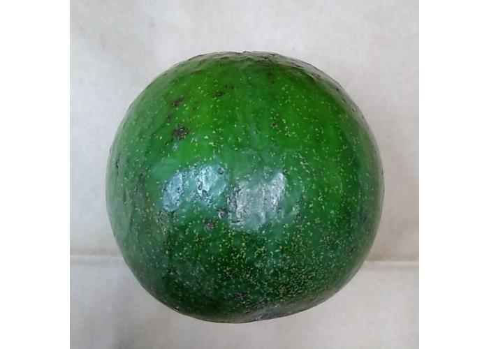 Авокадо сорт Наваль, 500 гр.