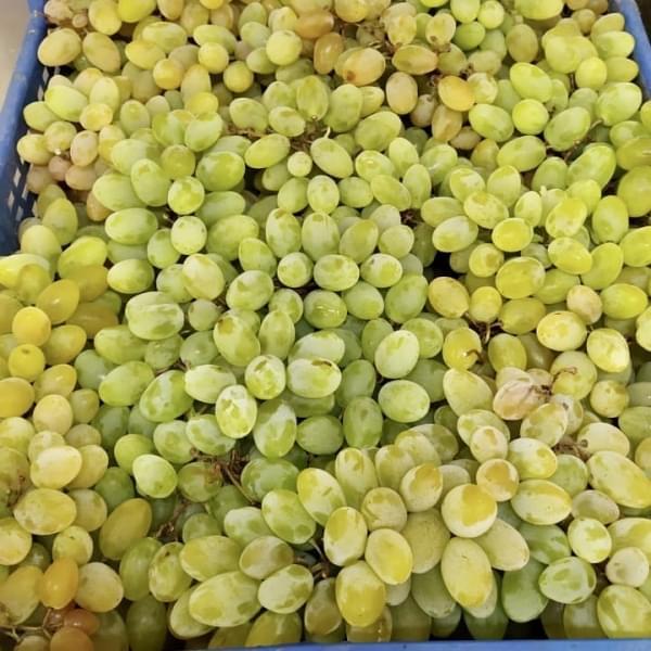 Виноград каталония, 0,5 кг