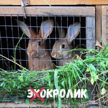 В поисках экологичного кролика