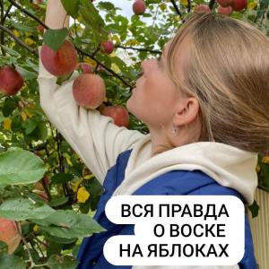 Воск на яблоках?