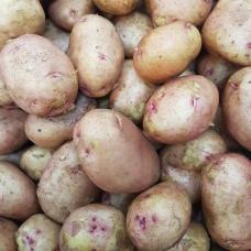 Картофель сорт ЖУКОВСКИЙ, 1 кг.
