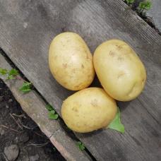 Картофель молодой, 1 кг.
