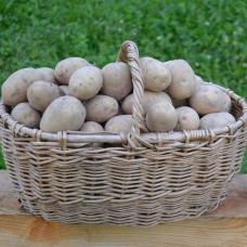Картофель, 5 кг.