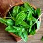 Зелень и салаты